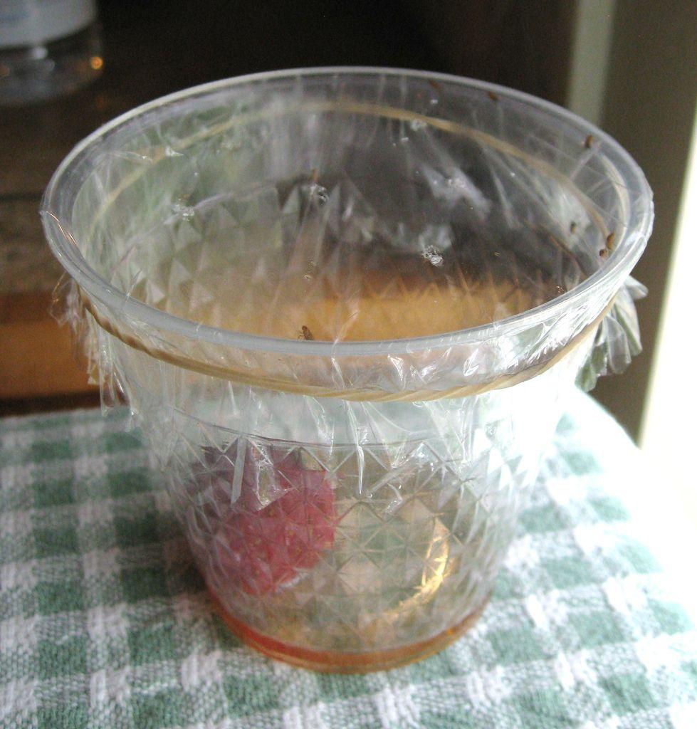 eagle fruit fruit fly trap