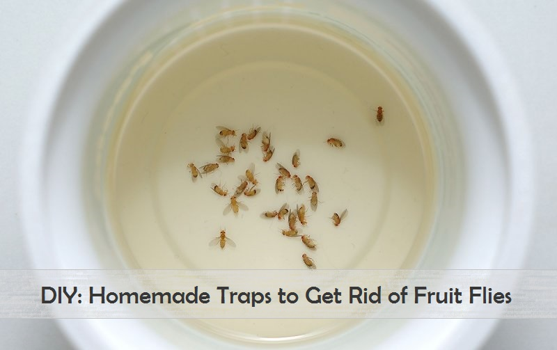 how to get rid of small flies at home