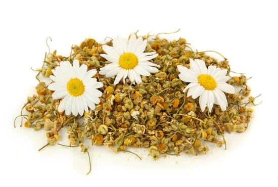 Chamomile Herb Allergies