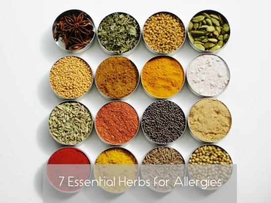Essential Herbs for Allergies - Home remedies