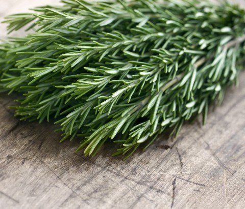 Loss your weight with hearbs- rosemary