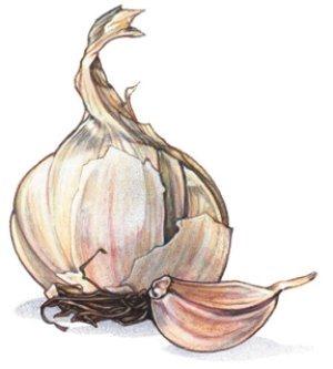 health-benefits-of-garlic.jpg